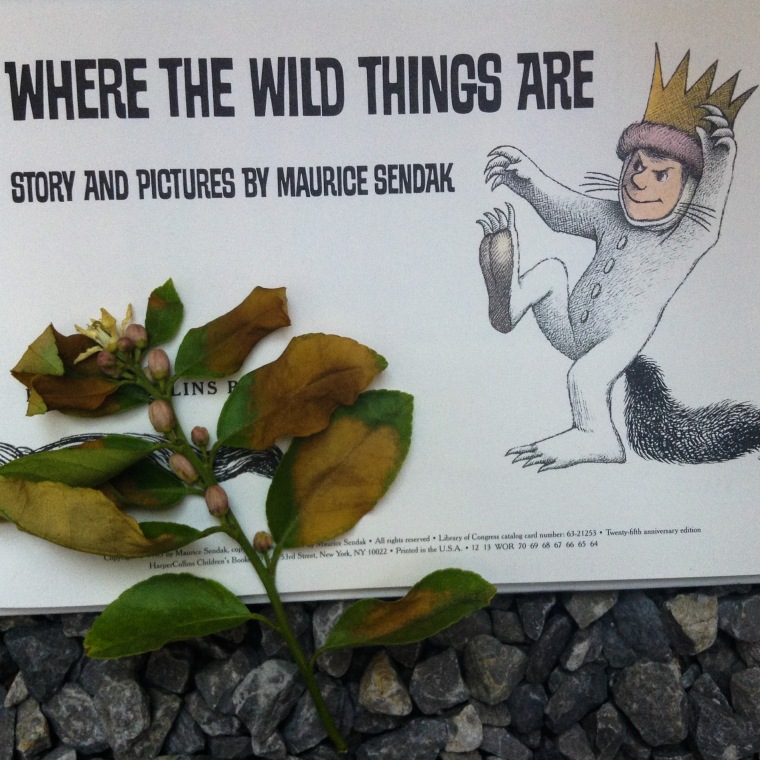 wild things 2 mundo emilia moncharis